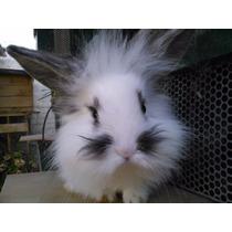 Conejos Enanos -¡mascota Ideal!