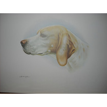 Laminas De Perros Para Arte Frances Y Para Enmarcar