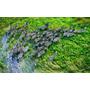 Cebra-en Bastidor De 100x65 Cm.exelente Calidad