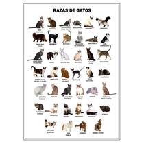 Razas De Gatos Animales En Tela Canvas 90x65 Cm Exelente