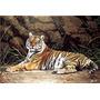 Cuadro Jorge Rajadell, Tigre, Edición Limitada 60 X 80cm