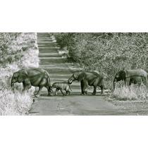 Familia Elefant Papel Foto De 80x50 Cm - Exelente Calidad