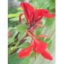 Muy Buen Cuadro De Flores Impreso En Tela En Canvas 71x95