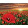 Imagenes Flores En Tela Canvas 80x60 Cm Exelente Calidad