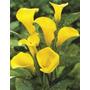 Muy Buen Cuadro De Flores Impreso En Tela Canvas 75x96