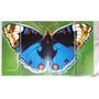 Cuadro Triptico Moderno Mariposa !!!