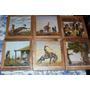 Lote De 6 Cuadritos Molina Campos De 20x20 Aprox Gauchesco