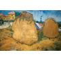 Cuadro De Van Gogh Impreso En Canvas Con Bastidor 50x33