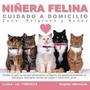 Niñera Felina A Domicilio!!!!