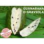 Guanabana O Graviola 30 Unidades Para Un Mes 100% Pura