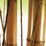 Cañas Quemadas De 1,50 Mts De Largo - De 3 A 5 Cm Diametro