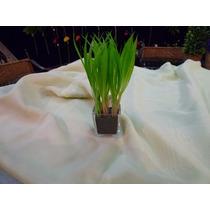 Maceta De Vidrio Con Pasto (flores Artificiales)