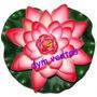 Pétalos Tela Flores Rosas Flor Flotante Decoración Eventos