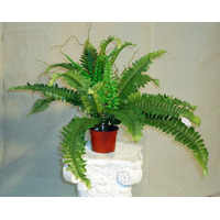 Planta Artificial Helecho Boston Fern. Regalosdeco