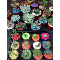 Mini Cactus Y Suculentas Ideal Para Souvenirs !!! X 1 Unid.