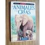 Billiken Para La Familia Los Animales Y Sus Crias