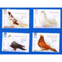 2014 Fauna- Aves- Palaomas- Ucrania
