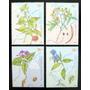 Argentina, Serie Gj 3085-88 Plantas Medicinales Mint L4824