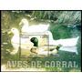 Cuba 2006. Fauna. Aves De Corral. Patos (bloque)