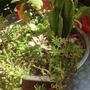 Colador Rosado Con Cactus Y 6 Suculentas, Súper Decorativo