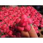 Flores De Tela De Raso - Camelias