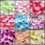 Petalos De Rosa En Dos Colores X 100 Unid