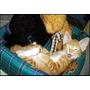 Garfield Busca Hogar! Bellisimo Red Tabby En Adopcion!