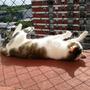 Red Segura Proteje Gato Gatito Caida Balcon Ventana Edificio
