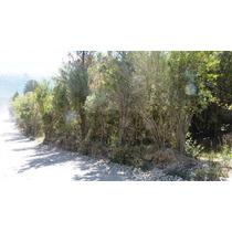 Venta - Lote - Argentina, Patagonia, Bariloche, Villa Lago Gutierrez