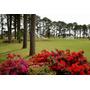Lote Pinares Golf & Country Club Al Costo En $ Sin Comision