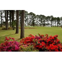 Lote Pinares Golf & Country Club - Oportunidad Golfistas