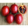 Tomate De Árbol - Tamarillo - Cyphomandra Betacea Semillas