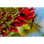 Ceibo Plantines Flor Nacional Zona Oeste