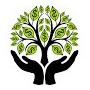 Money Tree =cacahuate De Guayanas =árbol De Dinero=plantines