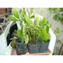 Hermosos Cactus De 30-40 Cm