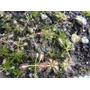 Kits Completos Para Plantas Carnivoras - Plantoluegoexisto