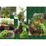 Maceteros Con Plantas Interior Y Exterior Arreglos Deco