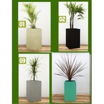 Macetas Con Plantas Para Decoración De Interiores