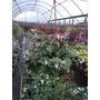 Plantas Colgantes B18 Varias Especies. Envíos
