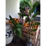 Orquídeas 2 Y 3 Varas De 40/50cm.