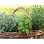 Plantas Aromáticas! Aromáticas! Cocina
