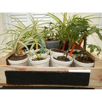 Cajoncito 12 Plantas, Pizarra Y Tutores. Aromáticas, Flores