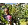 Plantita De Jacarandá 7 Años
