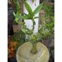 Cactus, Suculentas Y Bambu
