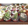 Cactus Grandes N9 Variedades Raras Ideal Souvenirs, Oferta!!