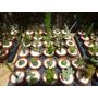 Set De 10 Cactus Y Crasas En Macetas De Barro Nº7