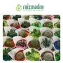 Mini Cactus Y Crasas. Ideales Para Souvenir Vivero Raizmadre