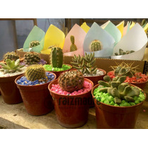 Combo 10 Mini Cactus Y Crasas. Vivero Raizmadre