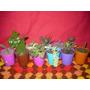 Cactus Crasas Y Suculentas En Macetas Multicolores Nº 6