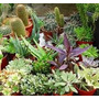 Suculentas/cactus Para Souvenirs.$ 22.00 San Martin!!!